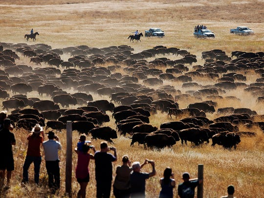 Spectators watch as riders and drivers herd about 1,200 bison toward the corrals at the 49th annual Custer State Park Buffalo Roundup in 2014. Custer State Park is known for drawing thousands of spectators to its fall buffalo roundup each year.