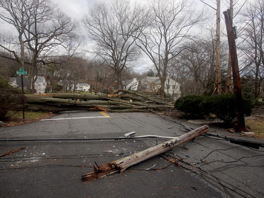 A large tree, along with power lines, lies on the road