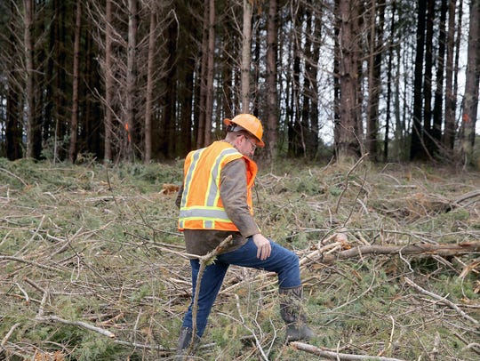 Adrian Miller, with Pope Resources, walks at a company timber harvest site near Hansville in April.