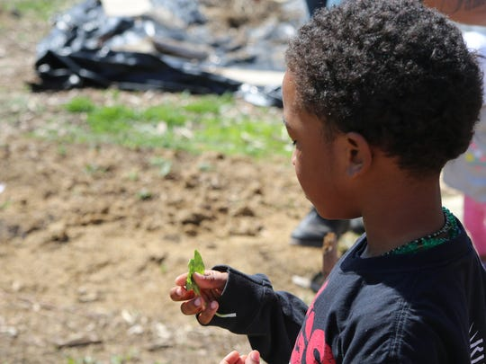 Kay'Vion Brown enjoys a freshly-picked spinach leaf from Victory Garden Initiative's urban farm in 2018.