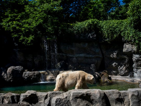 The Cincinnati Zoo & Botanical Garden's Lords of the