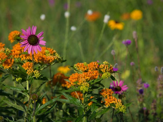 A field of prairie flowers was planted near the Camelot