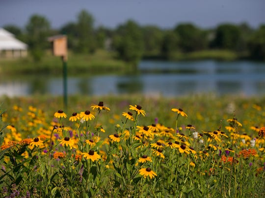 A field of prairie flowers grows behind the home of