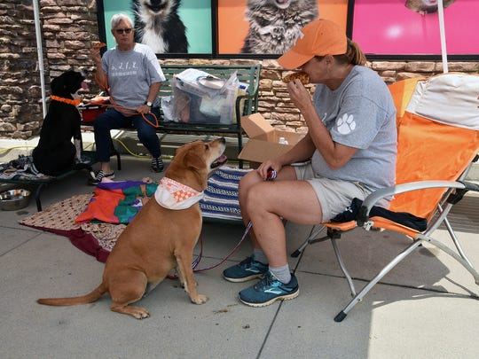Chole,8, a lab mix available for adoption watches as Katrina Hall from the Anderson County animal shelter eats her lunch Saturday July 14, 2018.
