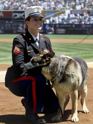 Former Marine Cpl. Megan Leavey and combat dog Sgt. Rex in a ceremony before a game at Yankee Stadium on May 13, 2012.