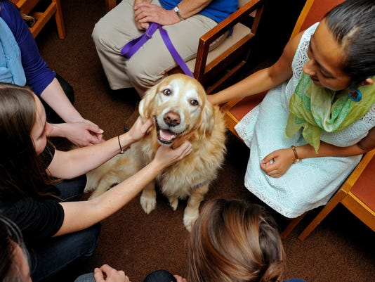 XXX_DH_Therapy_Dogs_130455_7