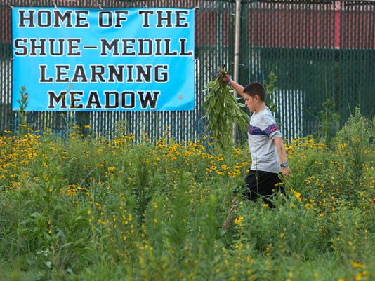 WIL MEADOW