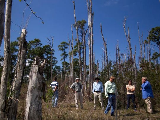 The team has a look at dead melaleuca trees in a tidal creek area near Charlotte Harbor.