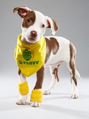 A 3-week-old Mocha poses for a portrait during filming for Animal Planet's Puppy Bowl on Oct. 5, 2016. After returning to Naples, Mocha was adopted and renamed Dakota.