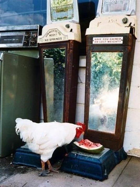 chicken by birney imes.jpg