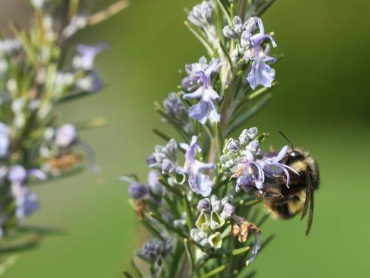 Gardening-Bee Sanctuaries (2)