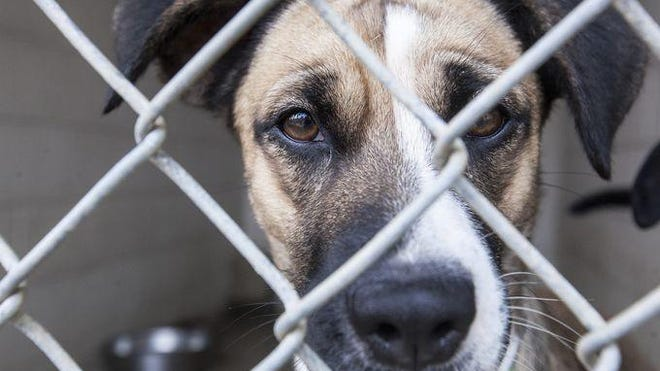 Sad dog at animal shelter.