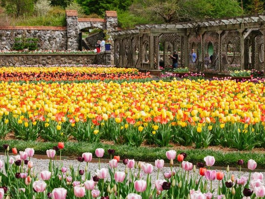 Biltmore Blooms opens in March and runs into May.