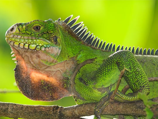 The lizard brain kept our ancestors safe when a panther pounced from a limb just overhead. In an ironic twist, these most ancient parts of the brain are making it difficult for us to think rationally at a time when rational thought is key to our survival.