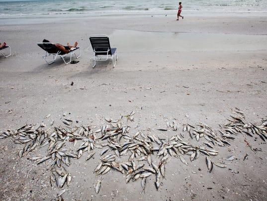 Fish killed by red tide litter sanibel 39 s shores for Tides for fishing sarasota