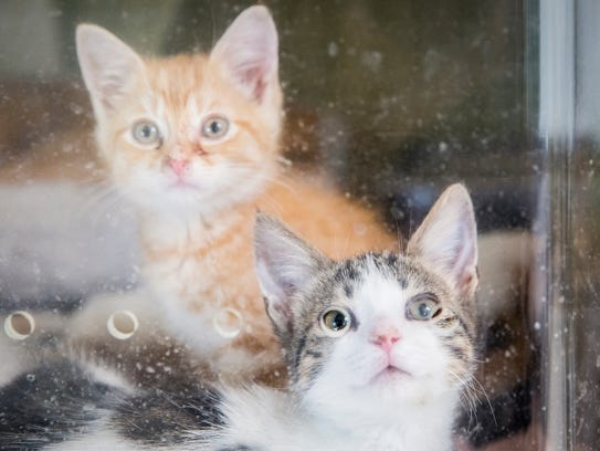 Dogs and cats await adoption at the Muncie Animal Care