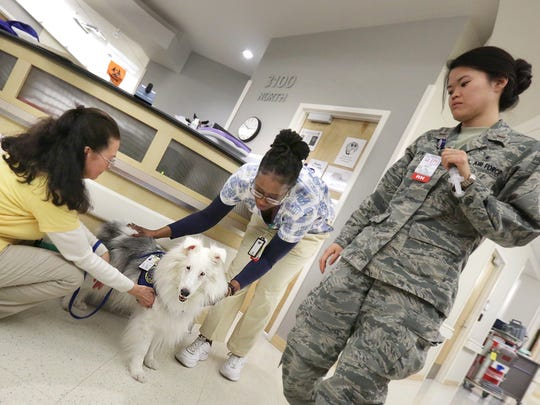 Melanie Paul, left, holds Lothair, a deaf therapy dog as nurse Monique Rolle pets her and 2nd Lt. Sarah Jun looks on at USAF Hospital Langley in Hampton. Lothair began serving as a therapy dog — providing emotional support to patients in hospitals, nursing homes and other settings — several years ago.