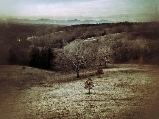 Joslin Winter Trees