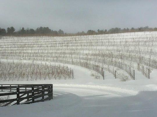 wine vineyard 2
