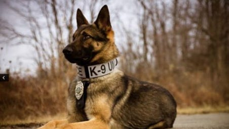 Batavia Police Department K-9 Officer Kraft was accidentally struck  by a car and killed Monday.