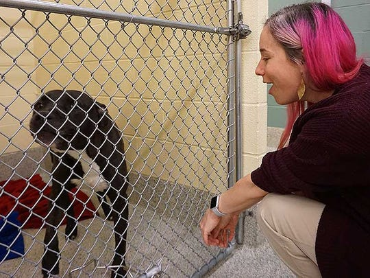 Melissa Jones, director of animal services at the Baltimore County Animal Shelter, squats down next to Bam Bam, a pit bull terrier in the shelter in Baldwin, Maryland.