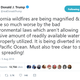 Trump: CA wildfires worse because rivers flow to ocean