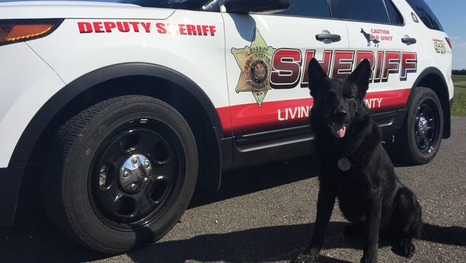 Gibbs, a Livingston County Sheriff's Office K9, will soon be wearing protective body armor.