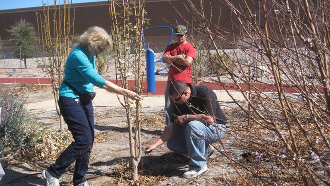 Dr. Angela O'Callaghan assists a workshop participant with pruning techniques.