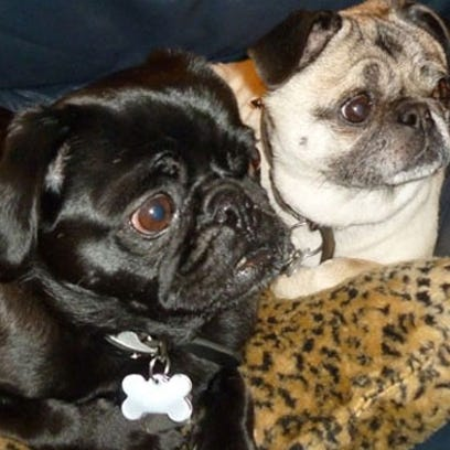 Milo and Maggie died after eating poisonous mushrooms.