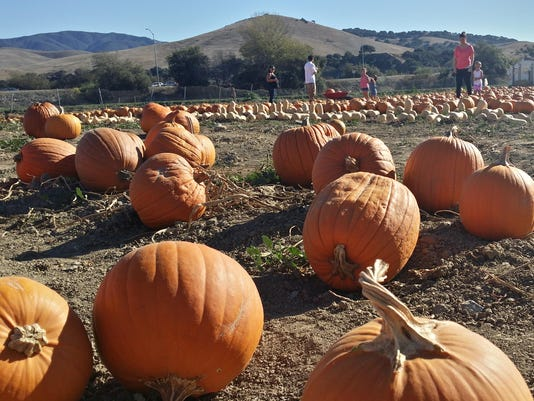 COVER PHOTO: Young Life Pumpkin Patch. Photo Courtesy Laura Kershner.
