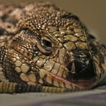Humane Society caring for 27 abandoned reptiles found in Ontario home