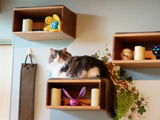 Homes-Catification (2)