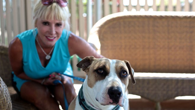 Stubbie, a bull terrier mix, was brought to the Humane Society of the Desert from the Save a Pet facility after the nonprofits partnered in the summer of 2014. Humane Society of the Desert board member Lindz Sangalli says the energetic rescue dog is her favorite. Many former Save a Pet workers now regret the partnership.