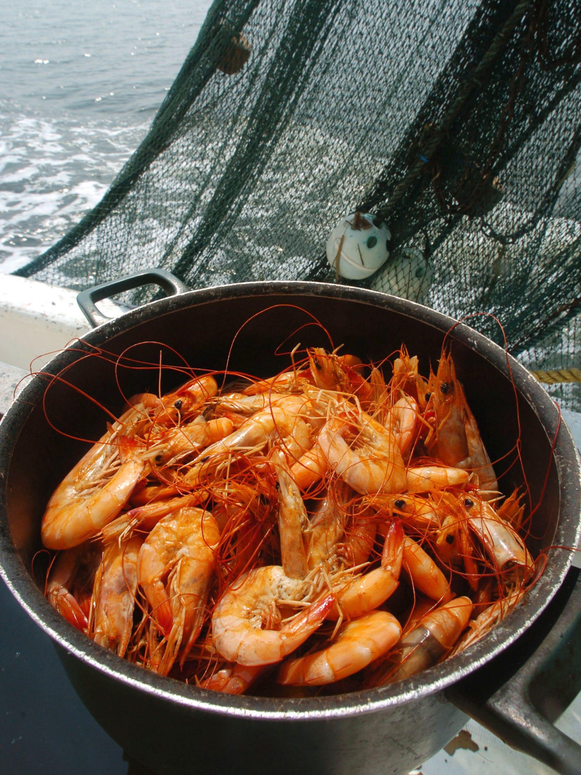 FRESH SHRIMP DECAL sticker local caught shrimper cold steamed pound