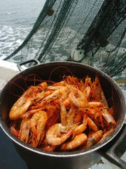 Shrimp is universally favorite seafood whose popularity dates back to ancient times.