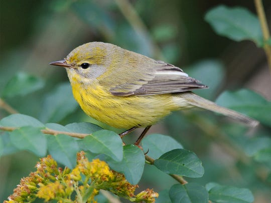 Learn about birds at fall Coffee& Conservation walks.