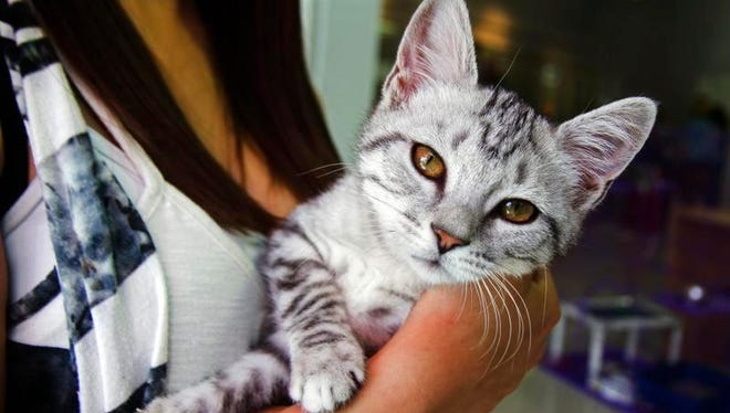 """Animal welfare workers have created an online database called """"Shelter Animals Count: The National Database Project"""" to keep track of the animals in shelters."""
