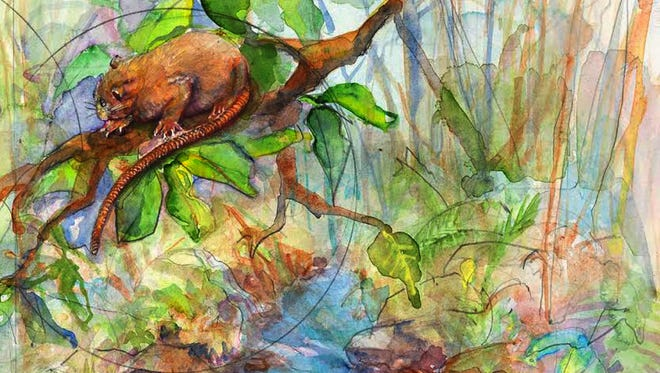 Vika, a sharp-toothed rat that grows up to 18 inches long and lives in a tree. It's just a painting, but Vika is real.