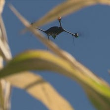 Drone above crops