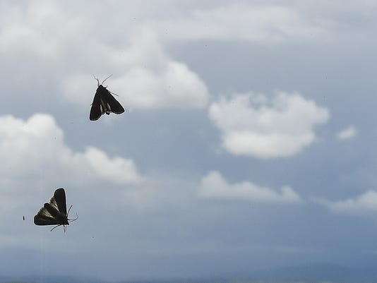 FTC0611-Moths