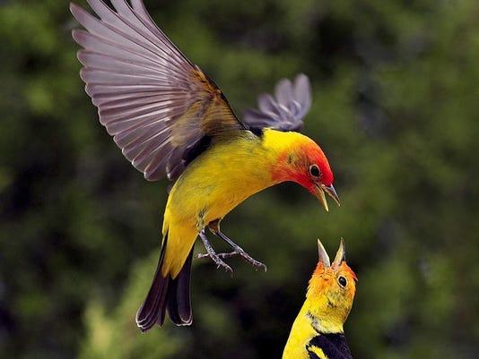 635790410157136955-birds-