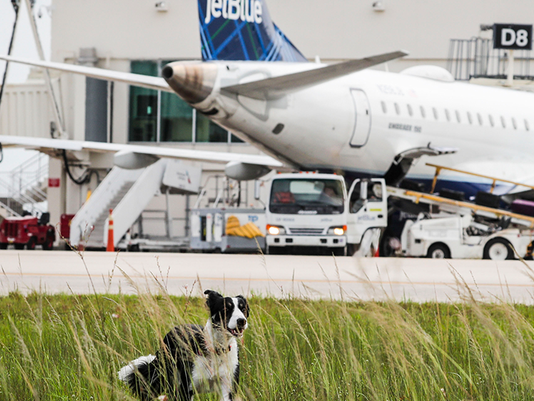 VIDEO THUMBNAIL - Airport Dog