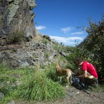 Karen Raines-Hunt stops along the Well Gulch nature trail to give treats to her dogs Angelina and Weasley at Lory State Park Sunday, Sept. 7, 2014.