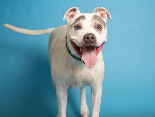 Millie is available for adoption at the Arizona Humane