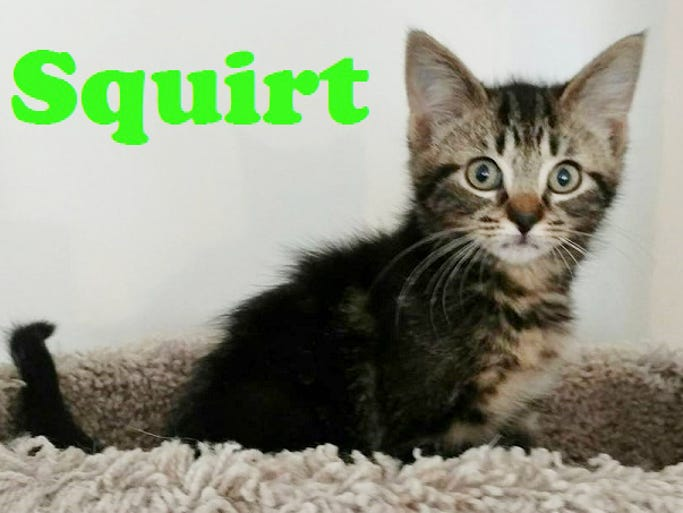 Kitten Squirt 96