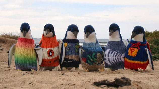 Knitted jumpers are placed on penguins to prevent them swallowing toxic oil that could kill them.