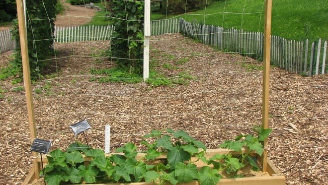A raised bed with a trellis can be used by all age groups.