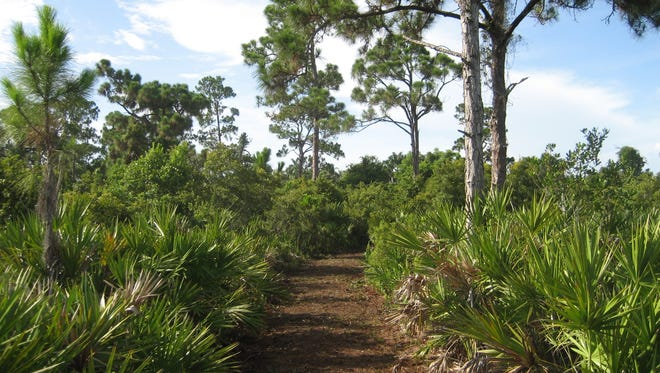 The new Pinewood Trails Park in Bokeelia opens Friday. This is the primitive trail.