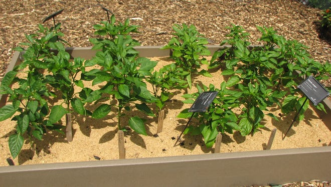 Rice hull mulch works best in conserving soil moisture in annual flower and vegetable beds.