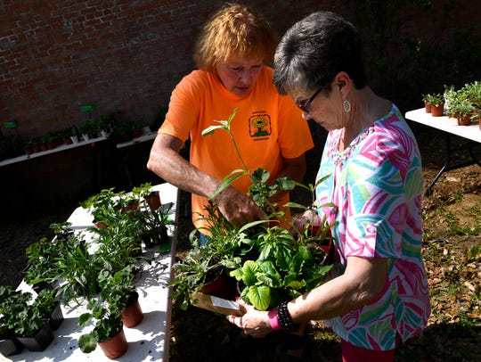 Donna Clark (left) assists Gayle Isenhower with finding plants during the Cross Plains Garden Club's annual plant sale Friday.. Isenhower lives in Putnam and said she's been keeping an eye out for the sale whenever she is in the area.